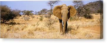 Elephant, Somburu, Kenya, Africa Canvas Print by Panoramic Images