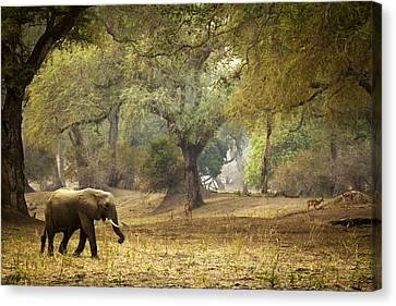 Elephant Strolling In Enchanted Forest Canvas Print by Alison Buttigieg