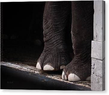 Canvas Print featuring the photograph Elephant Toes by Bob Orsillo