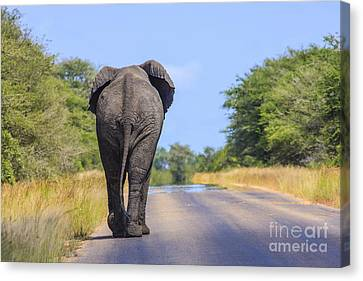Elephant Walking Canvas Print