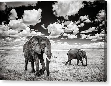 Elephants And Clouds Canvas Print