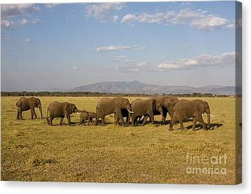 Canvas Print featuring the photograph Elephants At Lake Manyara by Chris Scroggins