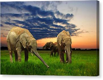 Feeding Canvas Print - Elephants At Sunset by Jaroslaw Grudzinski