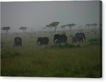 Elephants In Heavy Rain Canvas Print by Menachem Ganon