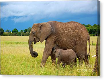 Elephants In Masai Mara Canvas Print by Charuhas Images