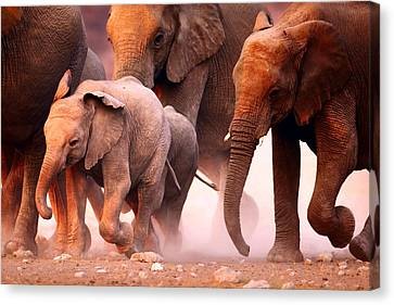 Elephants Stampede Canvas Print by Johan Swanepoel