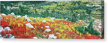 Elevated View Of Autumn Trees, North Canvas Print by Panoramic Images