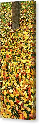 Elevated View Of Fallen Leaves, Pacific Canvas Print by Panoramic Images