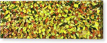 Elevated View Of Fallen Leaves, San Canvas Print by Panoramic Images