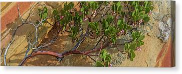 Elevated View Of Fallen Manzanita Tree Canvas Print by Panoramic Images