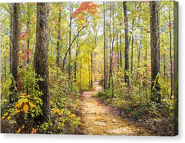 Benton Canvas Print - Elfin Forest by Debra and Dave Vanderlaan