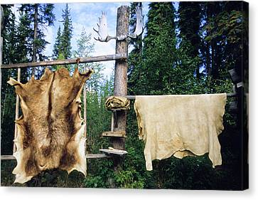 Elk And Moose Hides Stretched And Hang Canvas Print by Angel Wynn