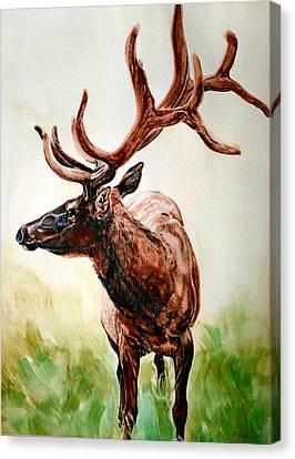 Elk Canvas Print by Audrey Van Tassell