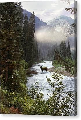 Most Canvas Print - Elk Crossing by Leland D Howard