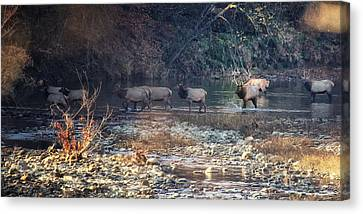 Elk Crossing The Buffalo River Canvas Print by Michael Dougherty