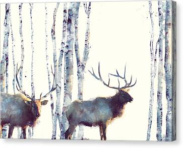Elk // Follow Canvas Print by Amy Hamilton