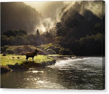 Elk In Sinkyone Wilderness Canvas Print by Leland D Howard