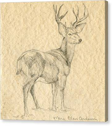 Canvas Print featuring the drawing Elk by Mary Ellen Anderson