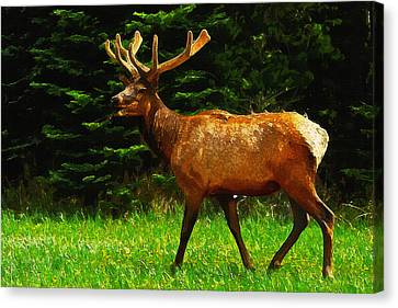 Elk Portrait Canvas Print by Ayse Deniz