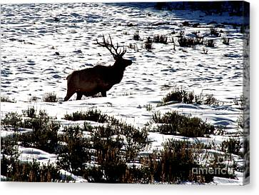 Elk Silhouette Canvas Print by Sharon Elliott