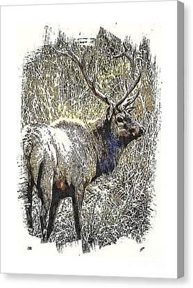 Rack Canvas Print - Elk by Spencer McKain