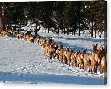 Elk Train Canvas Print