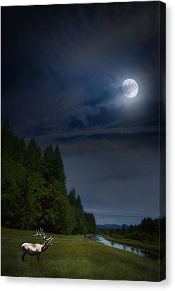 Elk Under A Full Moon Canvas Print by Belinda Greb