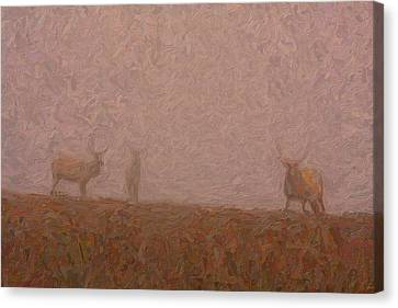 Elks In The Fog Canvas Print by Celestial Images