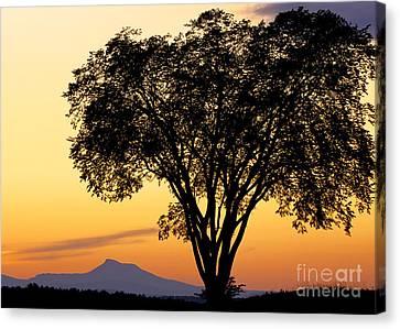 Elm At Twilight Canvas Print