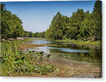 Canvas Print featuring the photograph Elm Lake At Brazos Bend In Texas by Zoe Ferrie