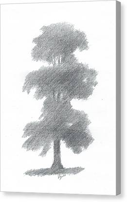 Elm Tree Drawing Number One Canvas Print by Alan Daysh