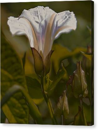 Canvas Print featuring the photograph Elsewhere by Leif Sohlman