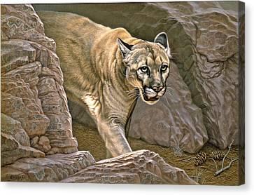 Elusive Hunter - Cougar Canvas Print by Paul Krapf