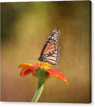 Cheers Canvas Print - Embracing Nature by Kim Hojnacki