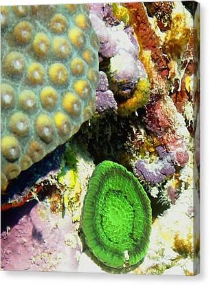 Emerald Artichoke Coral Canvas Print