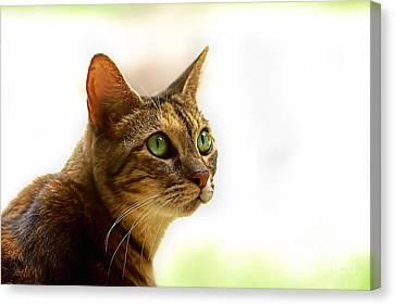 Canvas Print featuring the photograph Emerald Eyes by Olga Hamilton