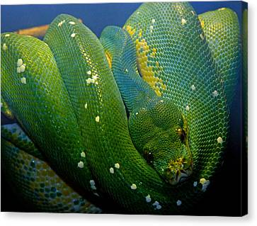 Emerald Trouble Canvas Print