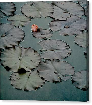 Canvas Print featuring the photograph Emerging by Sally Banfill