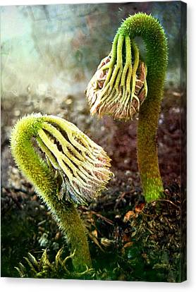 Emerging Sprouts Canvas Print by Shirley Sirois
