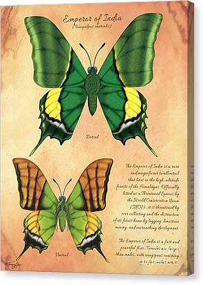 Emperor Of India Butterfly Canvas Print by Tammy Yee