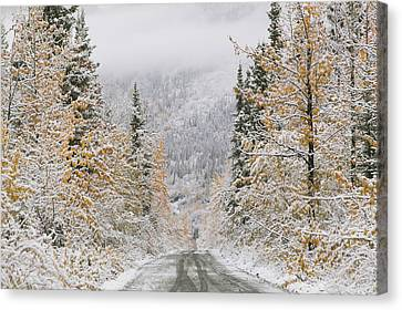 Empty Road Passing Through A Forest Canvas Print by Panoramic Images