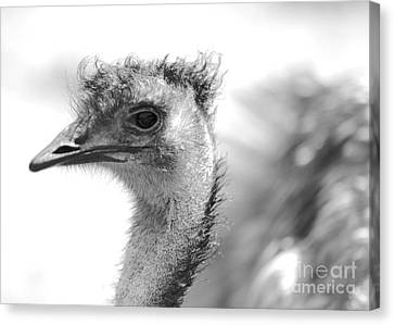 Emu - Black And White Canvas Print by Carol Groenen