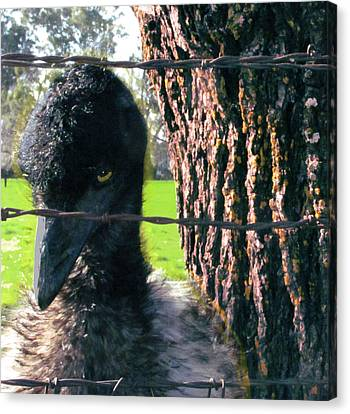 Emu Next To Tree Canvas Print by Marcia Cary