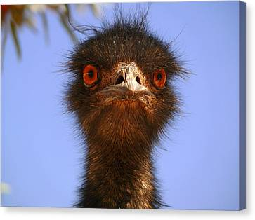 Emu Upfront Canvas Print by Evelyn Tambour