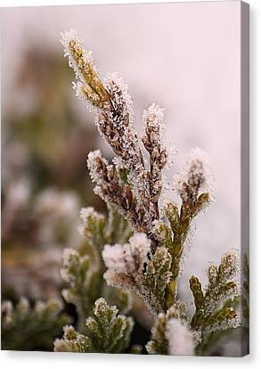 Encased In Ice Canvas Print by Dave Woodbridge