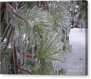 Encased In Ice Canvas Print