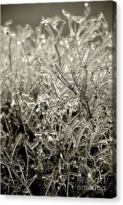 Encased In Ice IIi Canvas Print