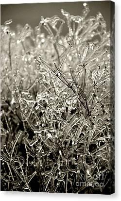 Encased In Ice IIi Canvas Print
