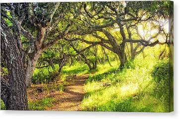 Enchanted Canvas Print by Aron Kearney