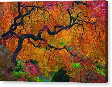 Enchanted Canopy Canvas Print by Patricia Babbitt